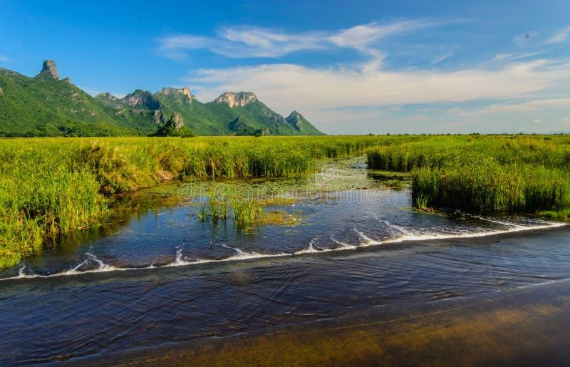 El parque y la montaña de Reed pertenecen es ecología fotos de archivo