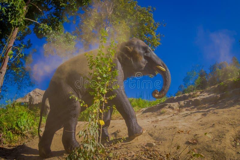 El paseo joven del elefante cerca del riverbank en la naturaleza, en santuario de la selva del elefante, durante un día soleado m fotografía de archivo