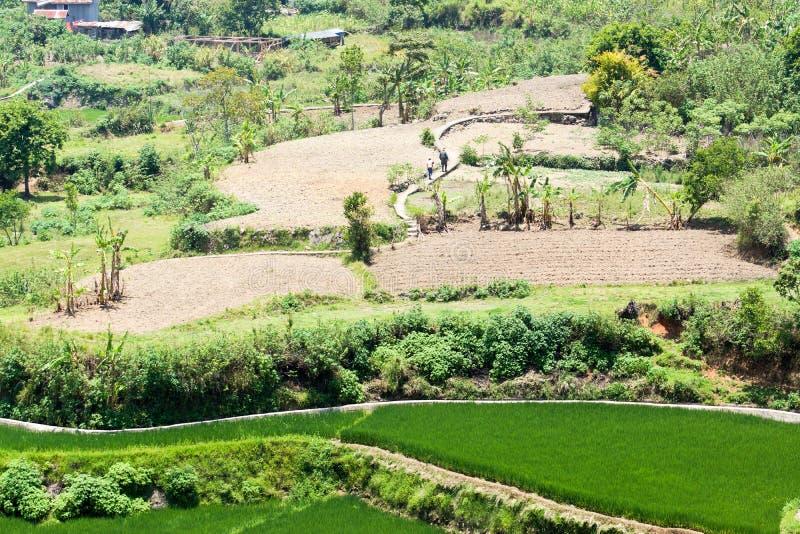El paseo a trabajar en las terrazas del arroz Kapay-aw fotos de archivo