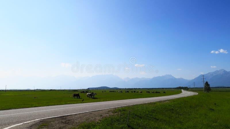 El pasto de caballos en un campo del paisaje en un día de verano en las montañas dio un día claro contra el cielo azul fotografía de archivo