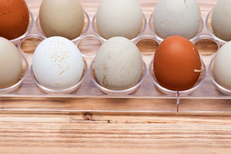El pasto libre orgánico fresco sucio del gmo y de la soja aumentó guantes acogedores calientes del invierno de los huevos del pol imagenes de archivo