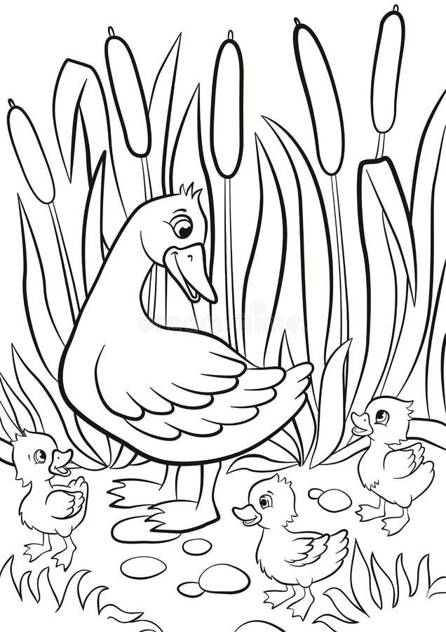 El pato bueno y los pequeños anadones lindos libres caminan en la orilla del lago libre illustration