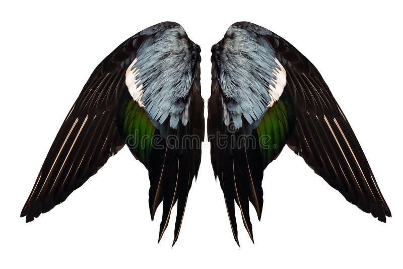 El pato real acortado se va volando en ángel delantero aislado el fondo blanco dos pares imágenes de archivo libres de regalías