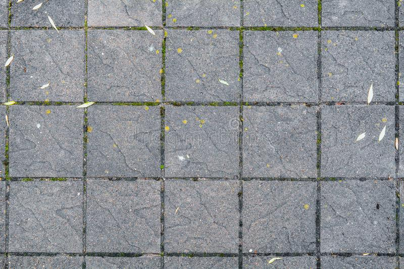 El pavimento concreto en el público pavimenta manera Tejas cuadradas grandes Urbano pavimente con el musgo fotografía de archivo