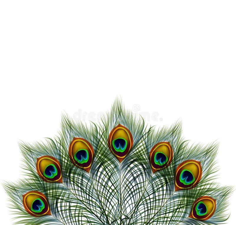 El pavo real hermoso del vector empluma en fondo retro con el espacio para el texto EPS 10 ilustración del vector