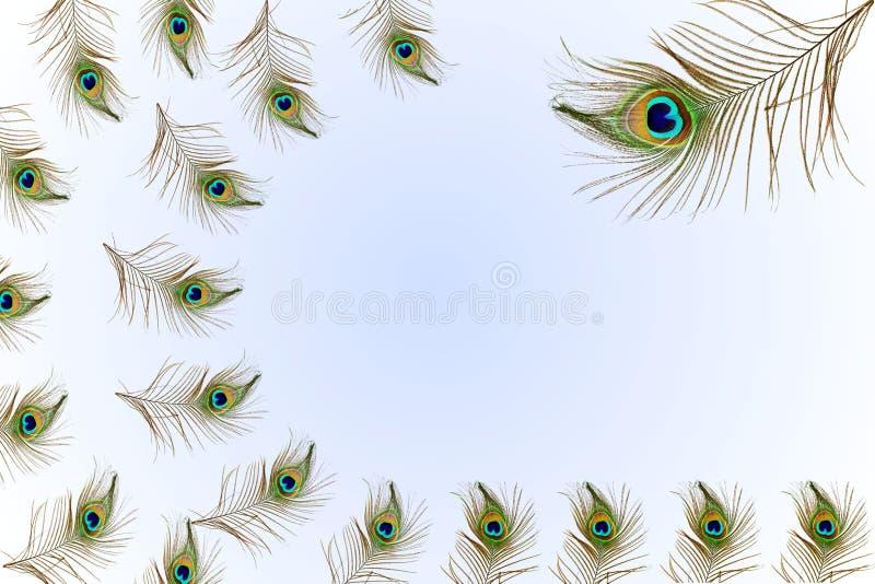 El pavo real hermoso empluma como fondo con el espacio de la copia del texto stock de ilustración