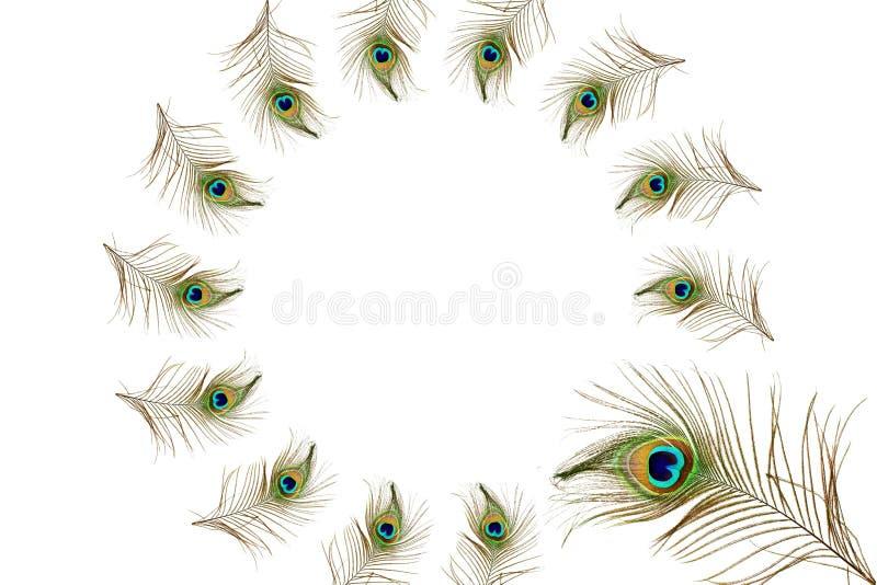 El pavo real hermoso empluma como fondo con el espacio de la copia del texto ilustración del vector