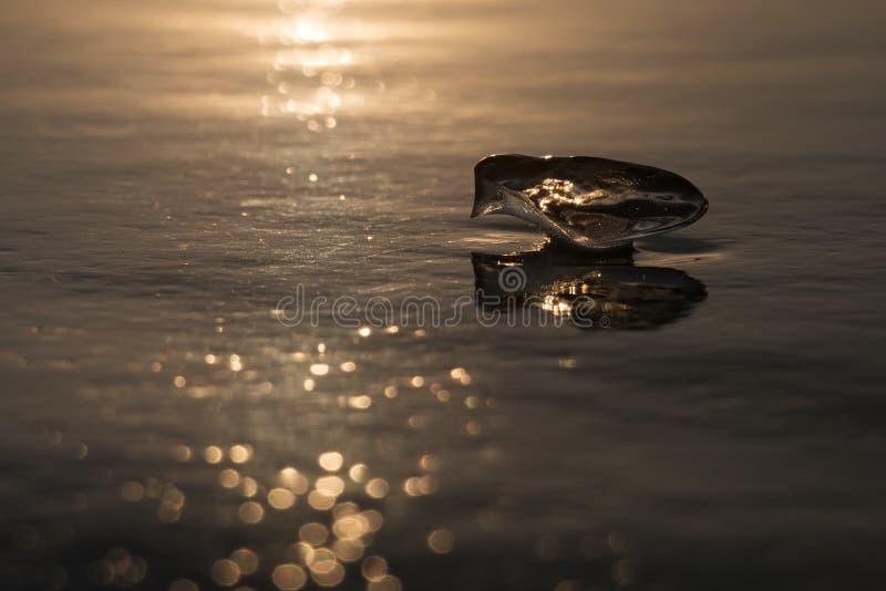 El pedazo de hielo le gusta un pájaro en luz de la puesta del sol fotografía de archivo