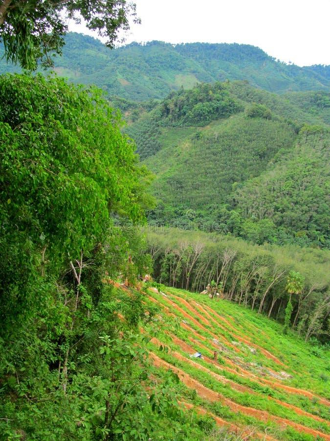El pedazo de naturaleza en Tailandia imágenes de archivo libres de regalías