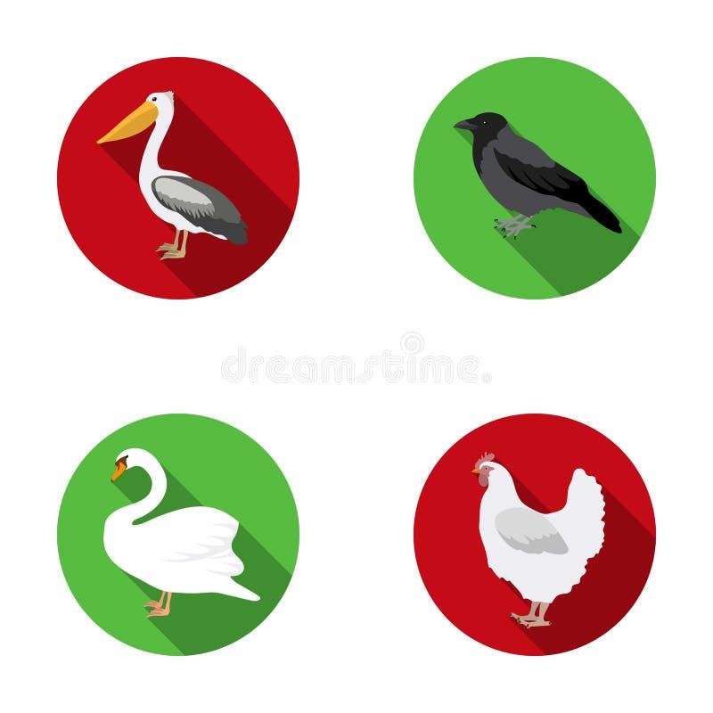 El pelícano, el cuervo y la otra especie Los pájaros fijaron iconos de la colección en web plano del ejemplo de la acción del sím stock de ilustración