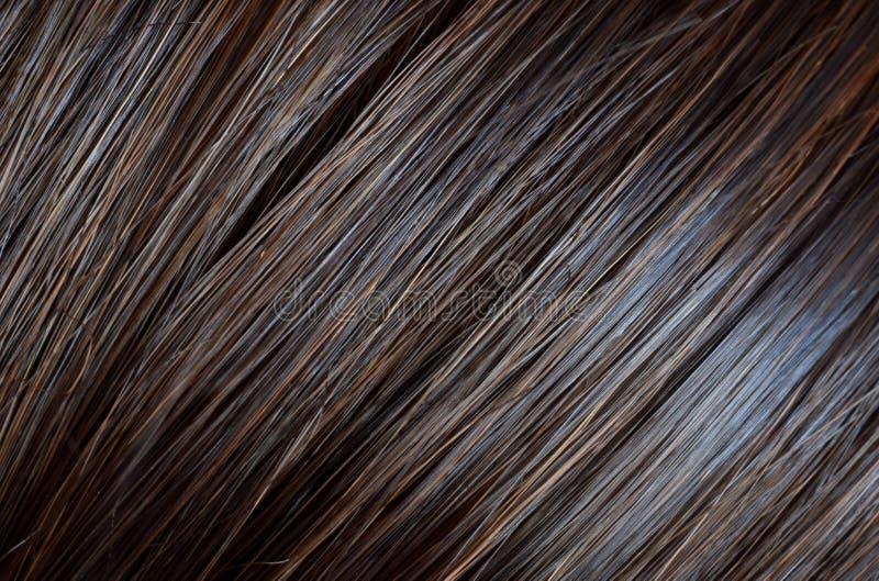 El pelo marrón humal natural se cerró para arriba fotos de archivo libres de regalías