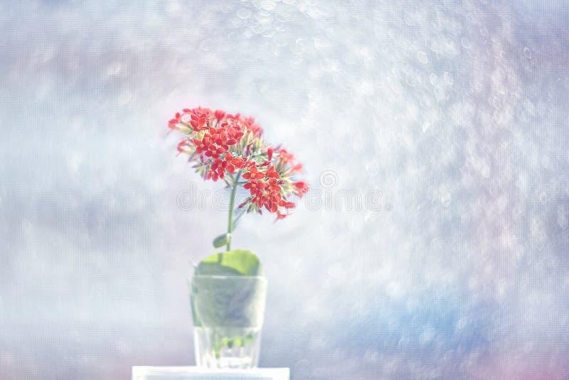 El pequeño calanchoe rosado florece en un fondo artístico hermoso en un día soleado wallpaper fotografía de archivo libre de regalías
