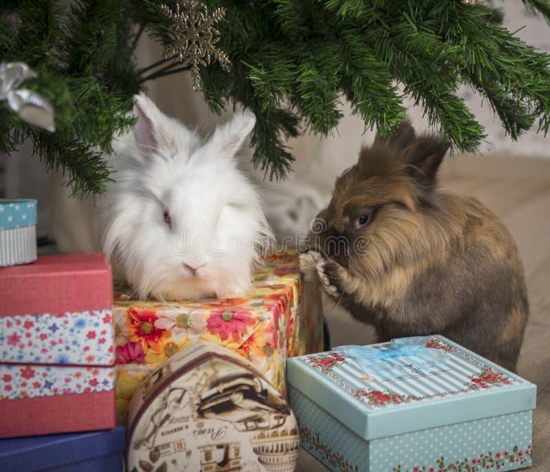 El pequeño conejo dos se sienta debajo del árbol de navidad imagenes de archivo