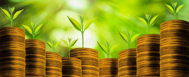 El pequeño crecimiento fresco del árbol en monedas de oro con el extracto empañó el fondo verde fresco de la naturaleza fotografía de archivo libre de regalías
