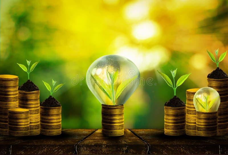 El pequeño crecimiento fresco del árbol en monedas de oro con el extracto empañó el fondo verde fresco de la naturaleza fotos de archivo libres de regalías