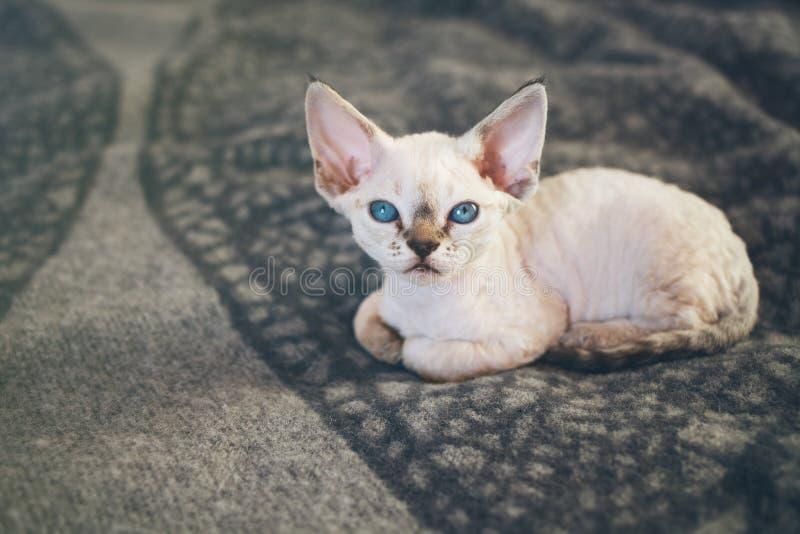 El pequeño gatito blanco lindo se está sentando en la tela escocesa caliente fotografía de archivo