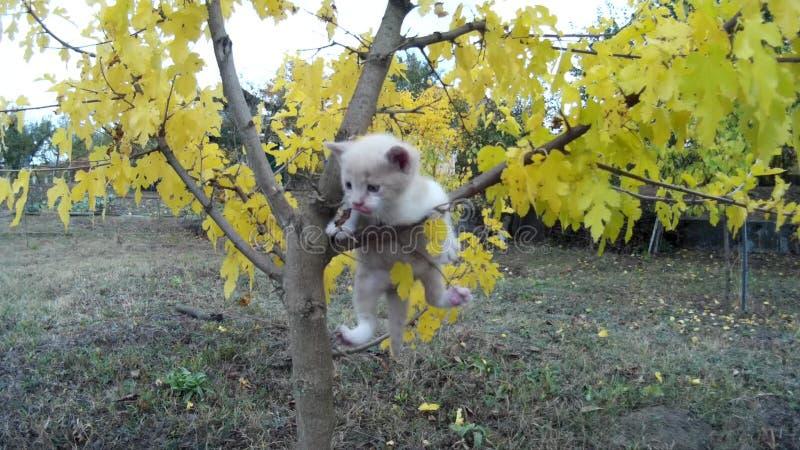 El pequeño gatito cae de árbol en prado en naturaleza almacen de video