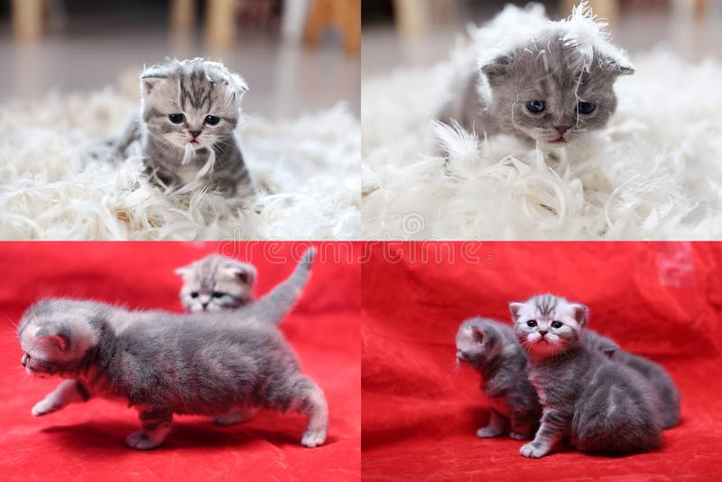 El pequeño gatito entre las plumas blancas, pantalla partió en cuatro porciones foto de archivo