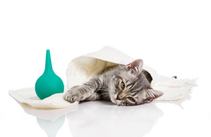 El pequeño gatito está enfermo, gatito del tratamiento imagen de archivo
