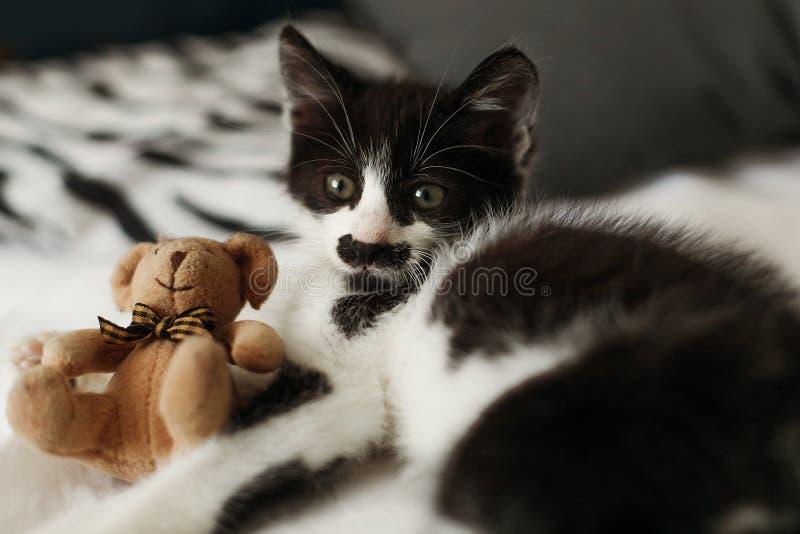 El pequeño gatito lindo con sorprender observa jugar con poco peluche t fotografía de archivo libre de regalías