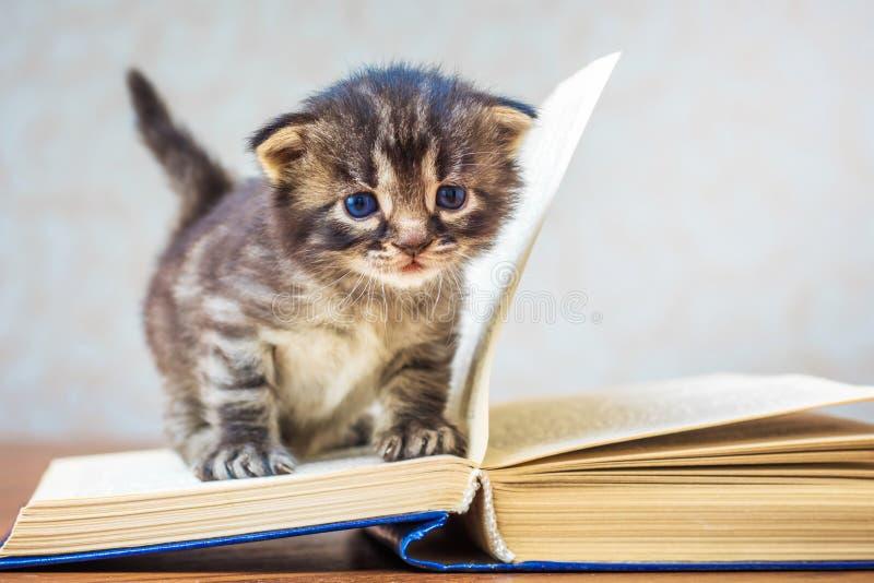El pequeño gatito lindo rayado se sienta en el libro Gatito con los ojos azules fotos de archivo libres de regalías