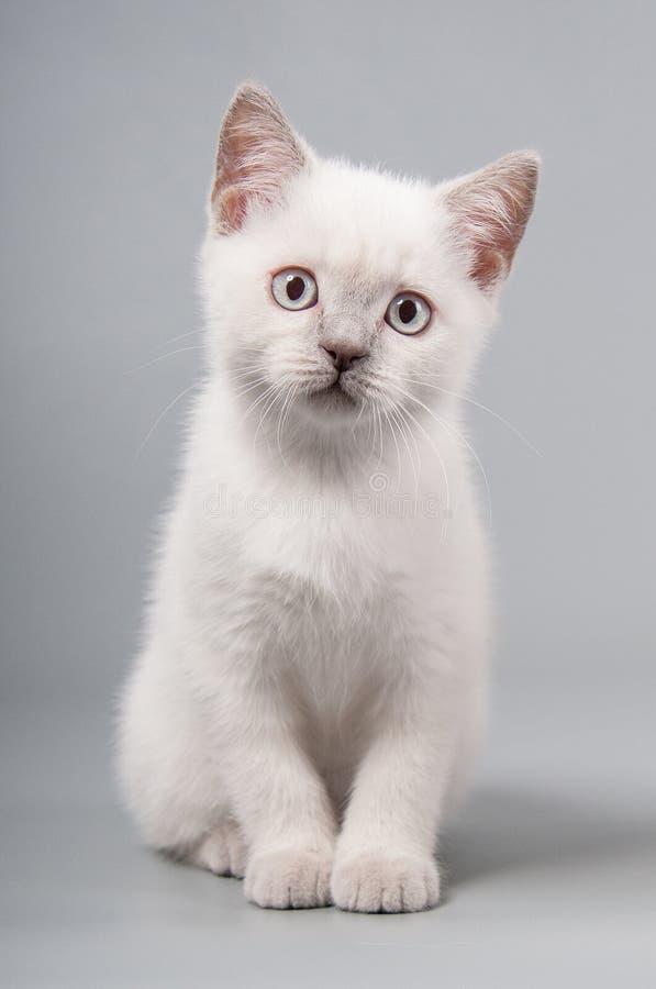 El pequeño gatito lindo se está sentando en un fondo gris foto de archivo libre de regalías