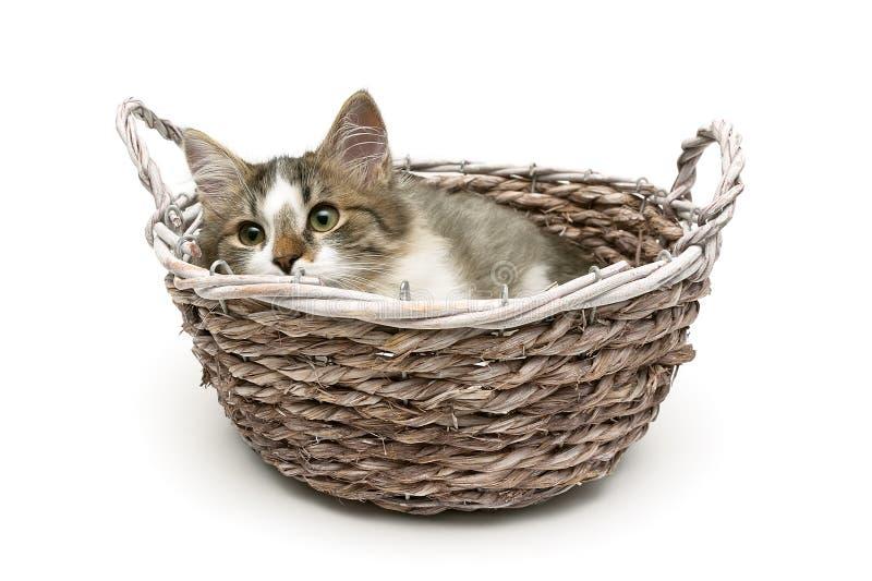 El pequeño gatito mullido miente en una cesta en un fondo blanco imágenes de archivo libres de regalías