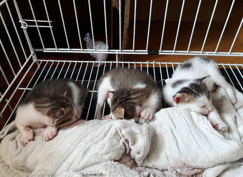 el pequeño gatito tres está durmiendo fotografía de archivo libre de regalías