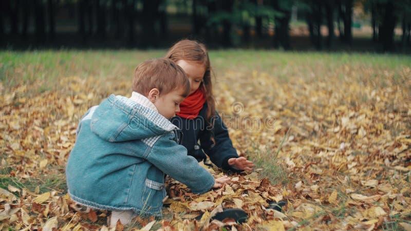 El pequeño hermano lindo y la hermana que juegan en el otoño parquean, los tiros del muchacho en las hojas caidas amarillo 4k de  almacen de metraje de vídeo