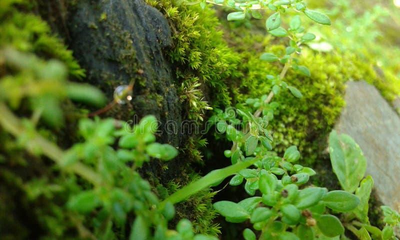 El pequeño jardín fotos de archivo libres de regalías