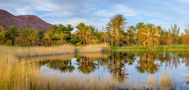 El pequeño lago situado en una arboleda de la palma foto de archivo libre de regalías