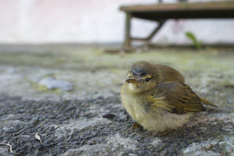 El pequeño pájaro en el gris crece imágenes de archivo libres de regalías
