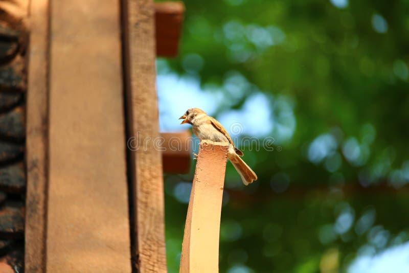 El pequeño pájaro está en la madera foto de archivo libre de regalías