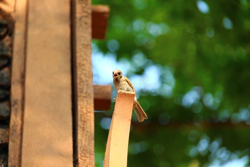 El pequeño pájaro está en la madera fotos de archivo