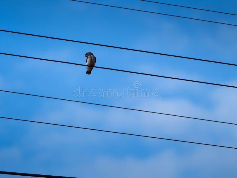 El pequeño pájaro que hace frente a vista lateral imagen de archivo libre de regalías