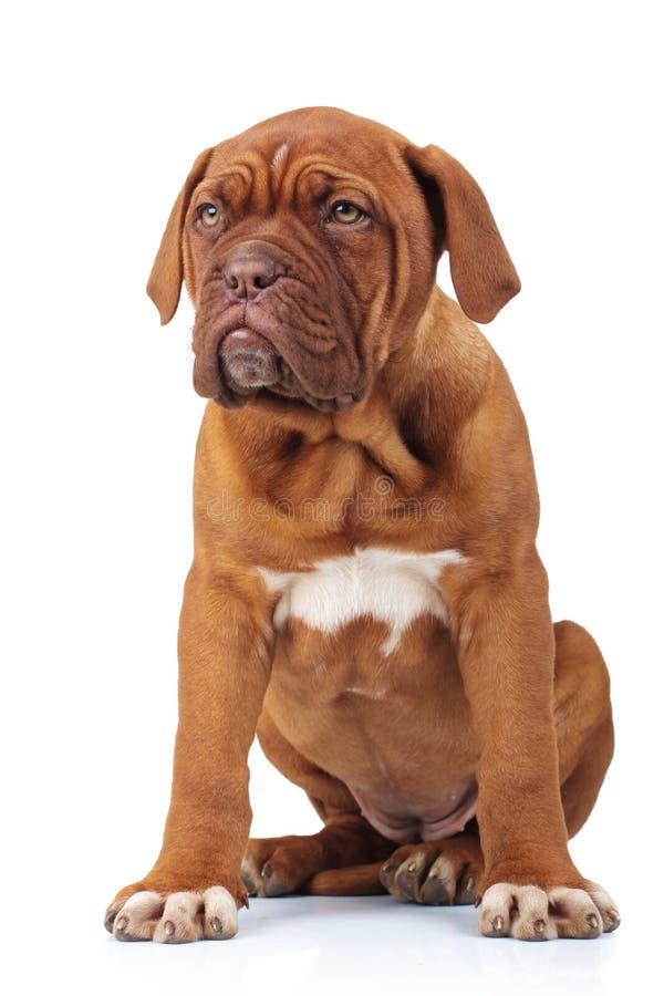 El pequeño perrito parece triste mientras que se sienta fotos de archivo