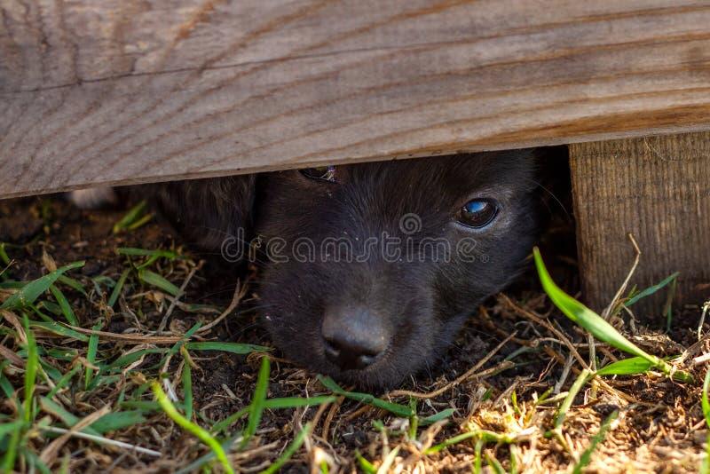 El pequeño perrito triste mira hacia fuera de debajo la cerca Perro sin hogar fotos de archivo libres de regalías