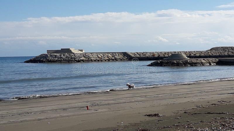 El pequeño perro de la opinión hermosa del mar que jugaba el puerto de las rocas sopló el cielo fotos de archivo