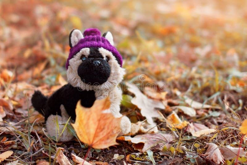El pequeño perro del juguete, perrito en sombrero se sienta en el follaje amarillo en el parque imágenes de archivo libres de regalías