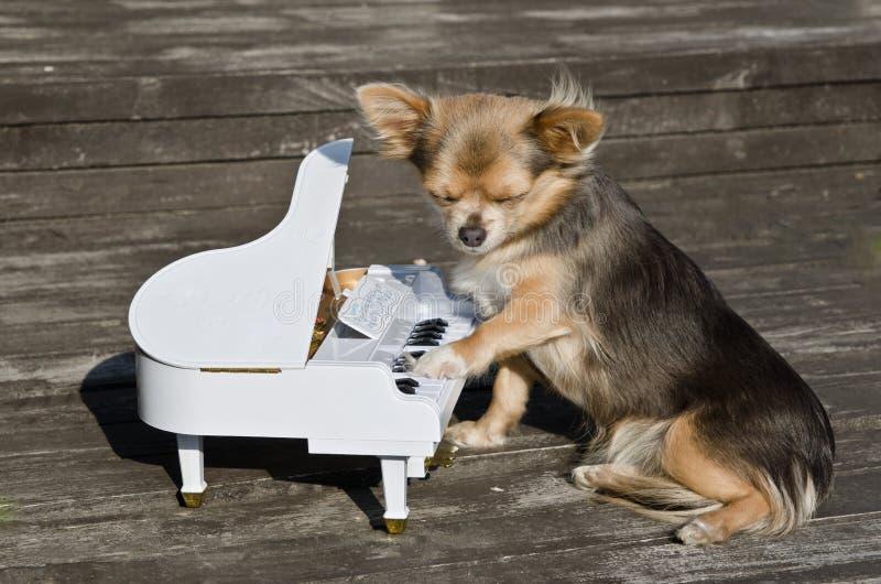 El pequeño perro está jugando en piano en etapa asoleada imagen de archivo