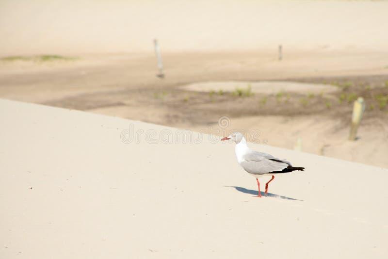 El pequeño tomar el sol del pájaro imágenes de archivo libres de regalías