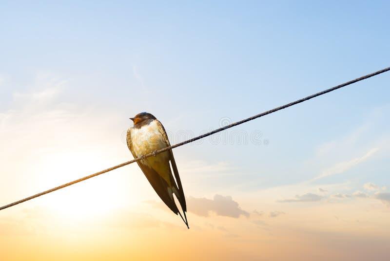 El pequeño trago se sienta en el alambre en el fondo de la puesta del sol foto de archivo