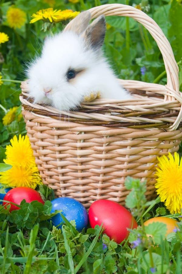 El pequeños conejo y huevos de Pascua en una hierba imagenes de archivo
