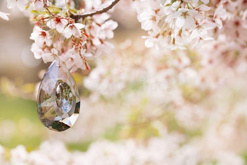 El pequeños pájaro y pajarera en primavera con la cereza del flor florecen s fotos de archivo libres de regalías