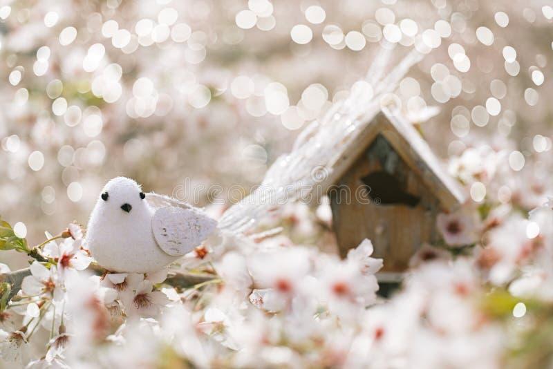 El pequeños pájaro y pajarera en primavera con la cereza del flor florecen s foto de archivo libre de regalías