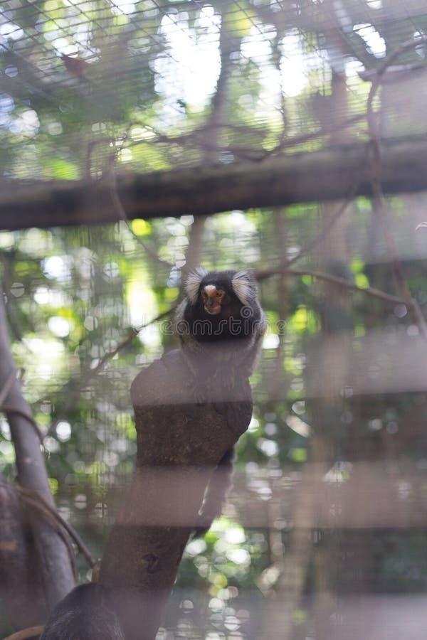El peque?o mono est? en la jaula fotos de archivo libres de regalías