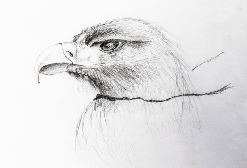 El perfil del águila se dibuja en lápiz ilustración del vector