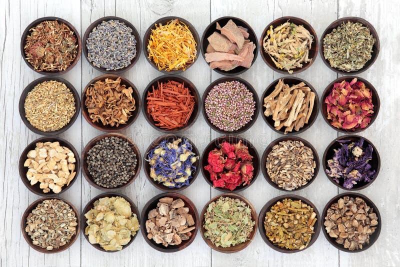El perforatum herbario de Medicine imagen de archivo