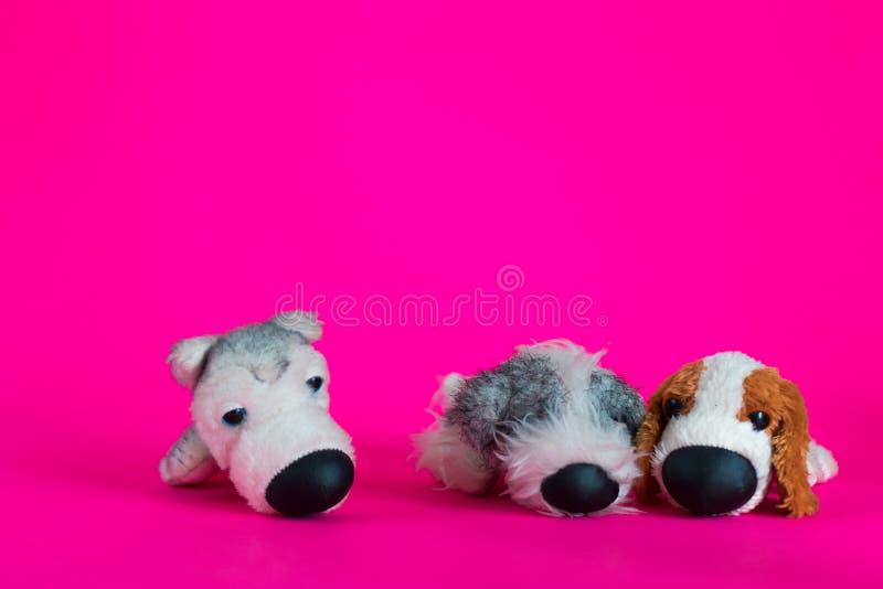 El perrito de dos juguetes se sienta junto y un perro de juguete alrededor en fondo rosado imagenes de archivo