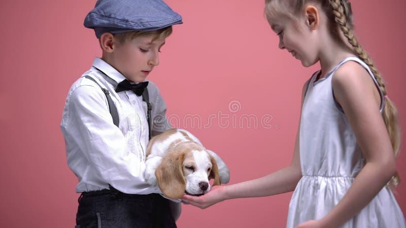 El perrito de la tenencia del niño pequeño, perro de alimentación de la muchacha de la palma abierta, animales ama y cuida foto de archivo